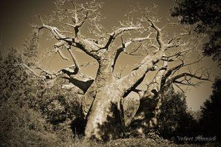 Tree_edited-1